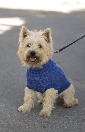 Bilde av hund med Blå refleksvest hund 1711-26